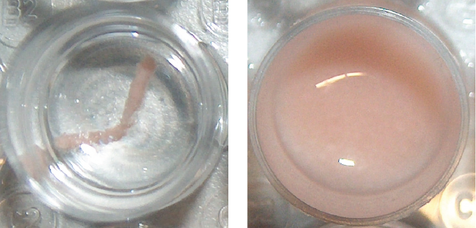 CAPTION: © Fraunhofer USA ## Before and after automated tissue homogenization of a hot dog test sample.