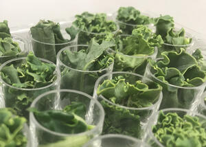 Leafy-green