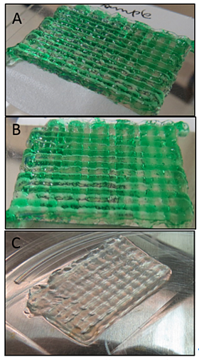 CAPTION: © Fraunhofer USA ## Frauhofer USA CMI has worked to develop a bioresponsive, biodegradable, microstructured material that can be grafted onto titanium implants to facilitate their osseointegration. Here, a support material (green) and gelatin hydrogel (GelMA) were bioprinted to form a 3D lattice structure.
